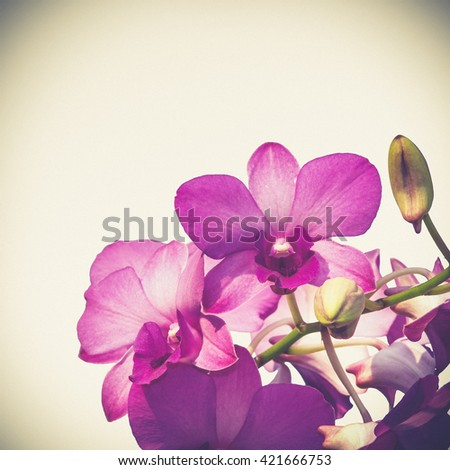pink purple dendrobium orchid flower (Vintage filter effect used)