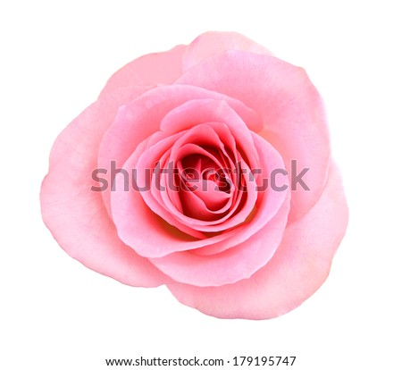 Rose top view stock photos illustrations and vector art