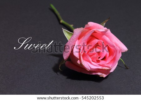 Pink Rose isolated on a black background with the words Sweet