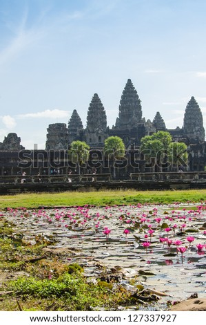 Pink water lilies in Angkor Wat, Cambodia
