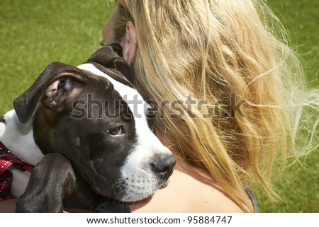 Pit Bull puppy looking over shoulder