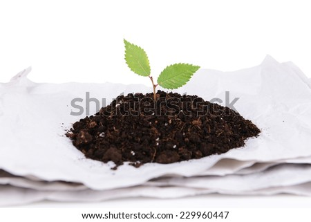 Plant growing from paper isolated on white