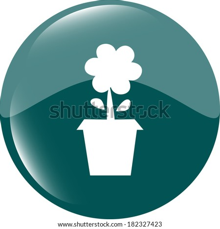 Plant in flower pot isolated on white