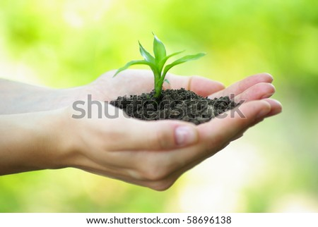 plant in the hand