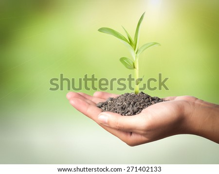 plant in the hand on green background