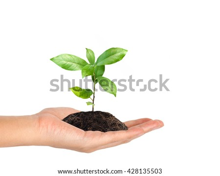plant in the hand on white background