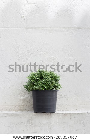 Plant On White wall with copy space for text