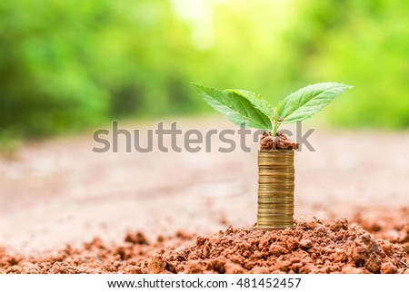 planted trees and coins.The concept of financial to investment.