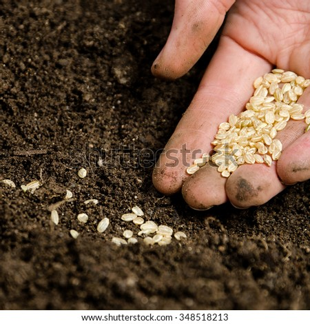 Planting small seeds into the soil