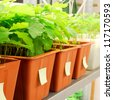 plants are being grown in laboratory - stock photo