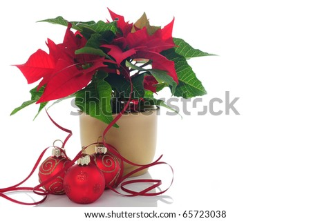 poinsettia with Christmas decorations and ribbon