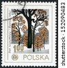 POLAND - CIRCA 1978: post stamp printed in Poland (polska) shows image of English oak (dab szypulkowy, quercus robur) from human environment emblem series, Scott catalog 2277 A701 1z gold, circa 1978 - stock photo