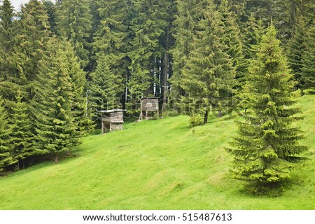 Poludnica, Slovakia - May 29, 2016: Cratch in forest
