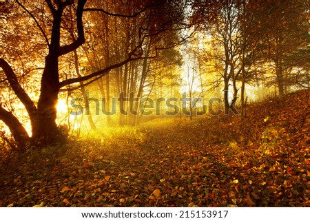 Pomerania, Poland/ Morning light