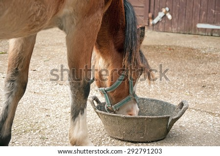 Pony eating from a rubber feed skip
