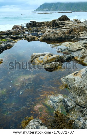 Pool with alga in middle of stones ( Ramberg, Norway, Lofoten).