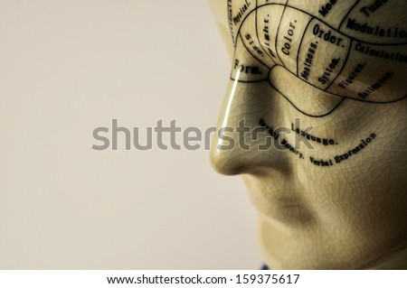 Porcelain Phrenology Head