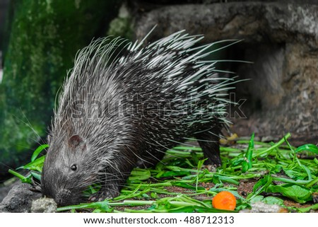 Porcupine and green vegetables on the floor