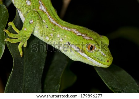 Portrait of a lizard on a leaf background