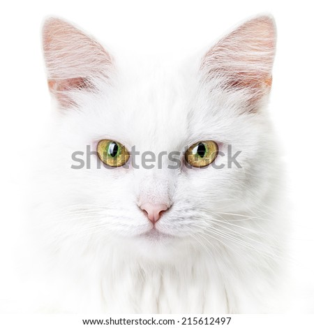 Portrait of a young white cat