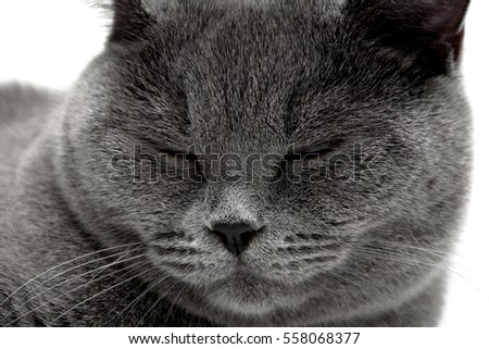 Portrait of gray cat sleeping. horizontal photo.