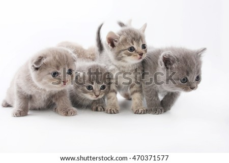 Portrait of groups cute kittens isolated on white studio background.