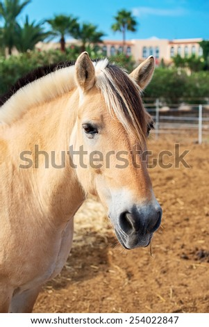 Portrait of horse in the paddock.