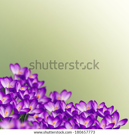 Postcard with fresh flowers  and place for your text. Abstract background for design. Spring background.