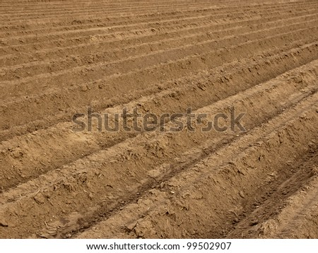 Potato field at spring