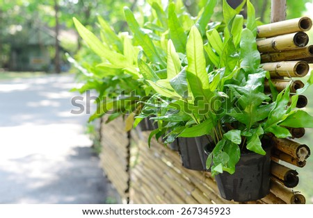 Potted plants on the side of the good weather