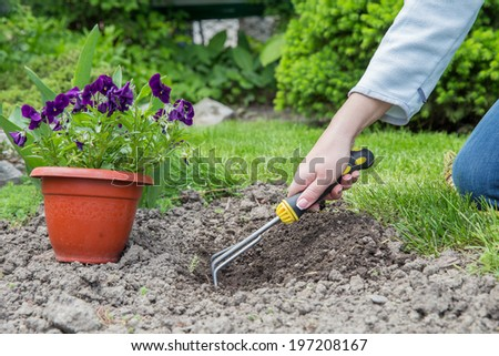 Preparing to plant flowers in the garden