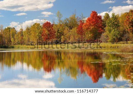 Pretty  Autumn reflections on a Michigan Pond, USA