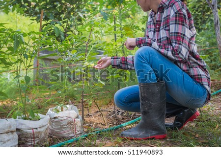 pretty woman Sitting with vegetable plot of green chili at countryside garden