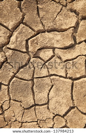 Prod soil cracks caused by drought.