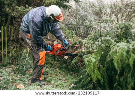 Professional gardener cutting tree with chainsaw.