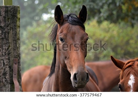 Profile of a brown horse