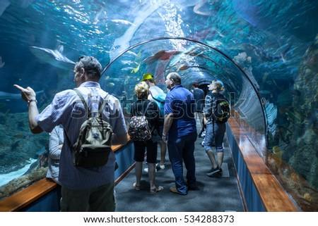 PUERTO DE LA CRUZ, TENERIFE, SPAIN-CIRCA 2016, JAN: People watch sharks and color fishes in underwater tunnel of the Loro Parque Aquarium. Loro Parque is the best zoo in Europe