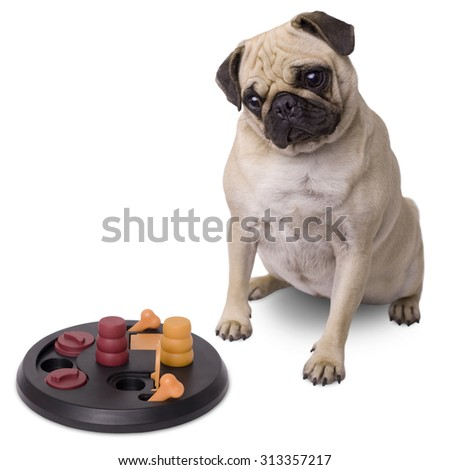 Pug dog with brain game isolated on white background
