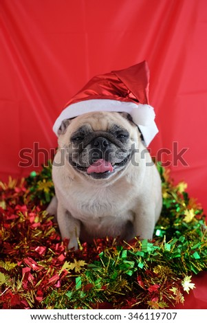 Pug wearing Santa Claus hat in the Christmas festival .