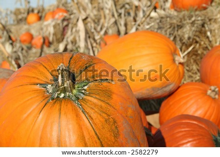 Pumpkins in the straw
