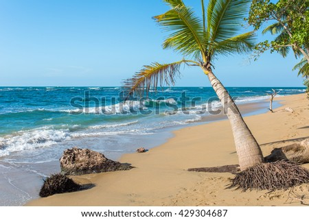 Punta Uva beach at Puerto Viejo in Costa Rica, wild and beautiful caribbean coast
