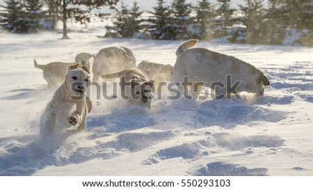 puppies snow games