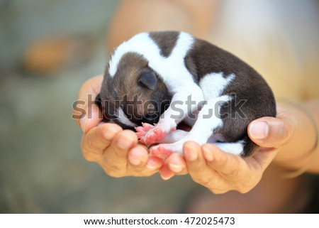 Puppy dog (two day) in hands