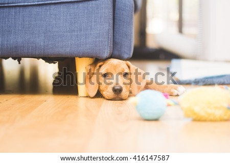 Puppy stuck under couch with toy