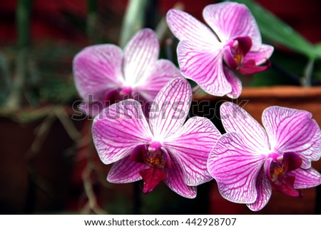 Purple and white orchid flowers