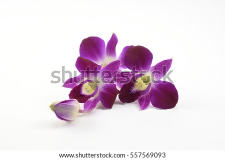 Purple Denerobium Orchids  on white background.