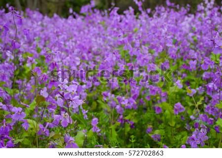 Maryland Flores al por mayor, anuales, plantas perennes, hierbas ornamentales, Groundcover MD Venta al por mayor Nursery Stock Delivery