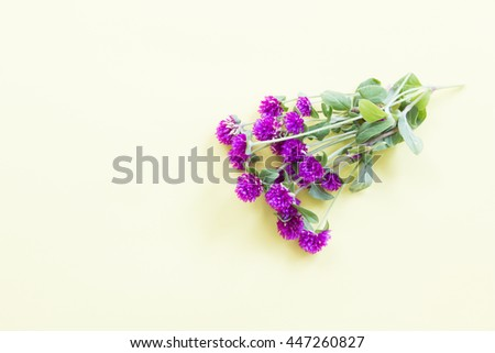 Purple flower on soft yellow background. flat lay, overhead view, top view