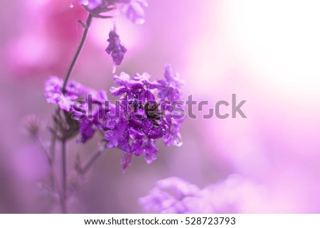 Purple flower,Violet flower