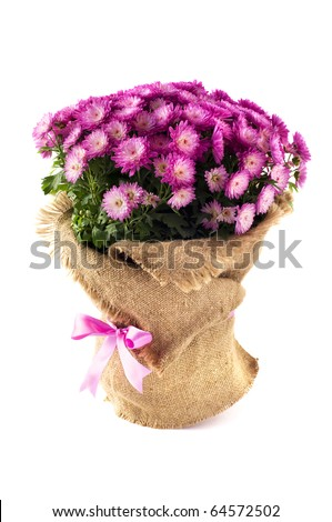 Purple flowers decorated with canvas isolated on the white